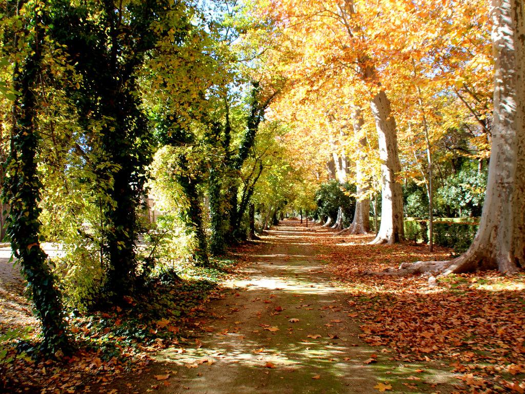 Por fin en Aranjuez